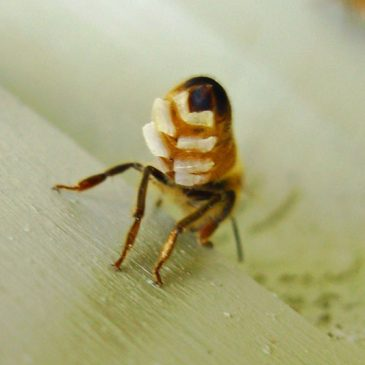 ? موم زنبور عسل – کاربردها و خواص درمانی آن